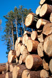 Deforestation after the squall Stock Photography