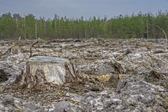 deforestation Stubbe av trädet efter bitande skog royaltyfria foton