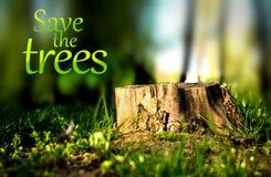 Deforestation. Stump of a cut tree, symbol of deforestation Royalty Free Stock Photo