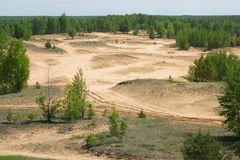 Deforestation. In the summer. Ecological problems and drainage Royalty Free Stock Image