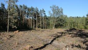 Deforestation summer landscape