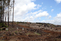 Deforestation in Tasmania, Australia Stock Photography