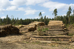 Deforestation. View of the deforestation, logs and wood Royalty Free Stock Photo