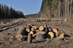 Deforested area with log's piles Royalty Free Stock Photos