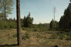 Deforested area Royalty Free Stock Photos