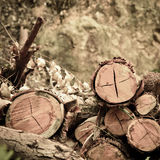 Deforested cut tree wood Royalty Free Stock Photos
