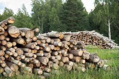 Deforested cut tree wood Royalty Free Stock Images