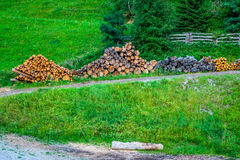 Deforested cut tree wood in forest Stock Image