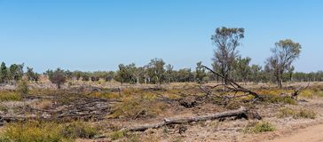 Deforested Land In Australia. Australian land devastated by deforestation for cattle grazing royalty free stock image