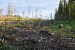 Deforested Lithuania. Destroyed and devastated forest in early spring Royalty Free Stock Photo