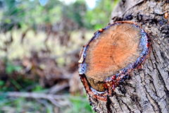 Deforested. Occurred at the hands of men Causing natural disasters Royalty Free Stock Photography