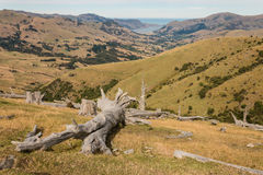 Deforested slopes at Banks Peninsula Royalty Free Stock Images