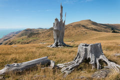 Deforested slopes at Banks Peninsula Stock Image