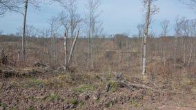 Deforested zeichnete Bereich auf DNR-Land in Nord-Wisconsin im Gouverneur Knowles State Park auf lizenzfreie stockfotos