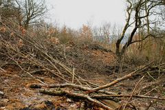 Deforesting. Problems with deforesting, destroying envirnoment Royalty Free Stock Photos