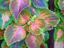 Deformación del color fotografía de archivo libre de regalías