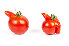 Deformed red tomatoes on a white background Royalty Free Stock Image