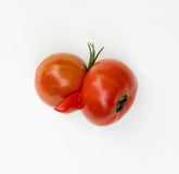 Deformed Tomatoes Stock Photography