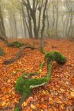 Deformed tree in forest Stock Image
