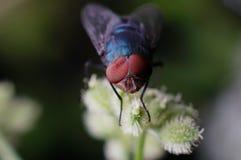 En fluga med deformering av sammansättningen synar fotografering för bildbyråer