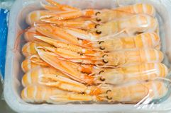 Defrosting langoustines Royalty Free Stock Photo