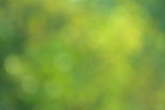 Defucused frodig lövverk Royaltyfria Bilder