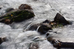 Defying the Current. Rocks and vegetation midstream resist the fast flow of a stream. For its part, the stream adapts, flowing around the obstacles stock photo