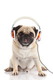 Deg pug dog with headphone isolated on white background Stock Photography