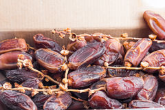 Deglet Nour or Kurma Stock Photography