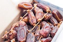 Deglet Nour or Kurma Royalty Free Stock Photos