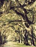 Degli alberi città dentro della savanna fotografie stock libere da diritti