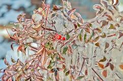 -24 degrés de Celsius Photographie stock libre de droits