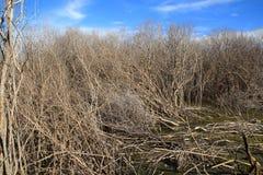 A degradação da floresta dos manguezais Fotos de Stock Royalty Free