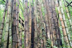 Degradacja bambusa las Zdjęcia Royalty Free