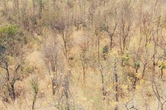 Degraded forest dry arid land. Degraded forest dry arid trees and grass stock images
