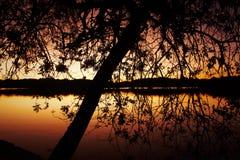 Degradera naturen fotografering för bildbyråer