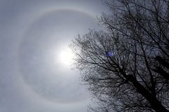 22 degree halo ring around the sun and a tree Royalty Free Stock Photography