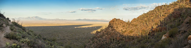 180 degree pano of desert in arizona. 180 degree panorama of sonoran desert in Arizona at dawn Royalty Free Stock Images