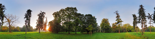 360 degree panorama, forest in park Royalty Free Stock Photos