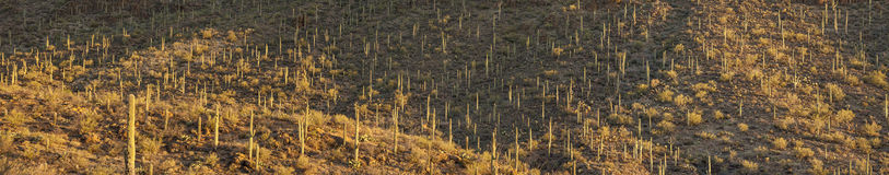180 degree panorama of sonoran desert Stock Image