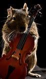 Degu-Hamster, der mit Cello steht Stockfoto