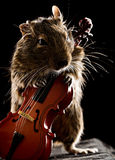 Degu mouse playing cello Royalty Free Stock Image