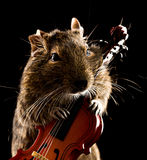 Degu mouse playing cello Royalty Free Stock Photos