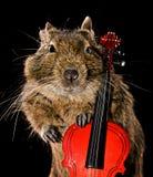 Degu musicale Fotografie Stock