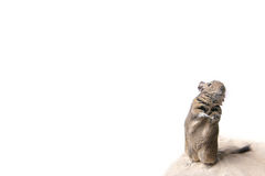 Degu on the sand. Photo of small degu during usual acts Stock Photography