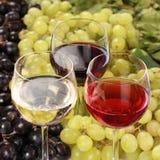 Degustación de vinos Foto de archivo