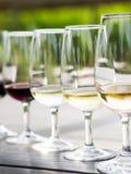 Degustación de vinos en Stellenbosch Imagen de archivo