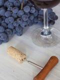 Degustation del vino Fotografia Stock