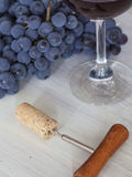 Degustation do vinho Fotografia de Stock