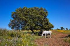 Dehesa草原通过de拉普拉塔方式西班牙 库存图片